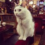 猫が働く純喫茶? 新宿の喧騒を忘れてひと休みを