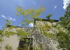 プライバシーと自然との融和を両立!中庭のある癒しの家【住まいの設計】