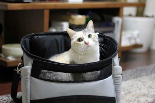3タイプ試して分かった!災害時の猫用キャリーバッグは「リュック型」がベスト