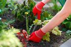 カインズで買える「てみ」って知ってる?ガーデニングや庭の掃除に便利なんです