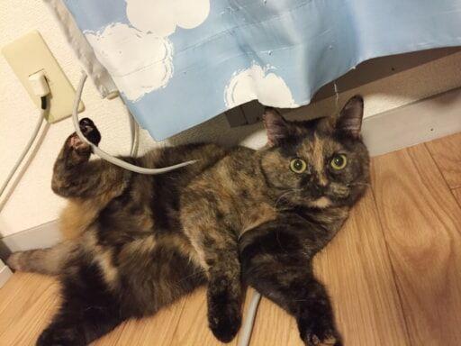 猫とコンセント
