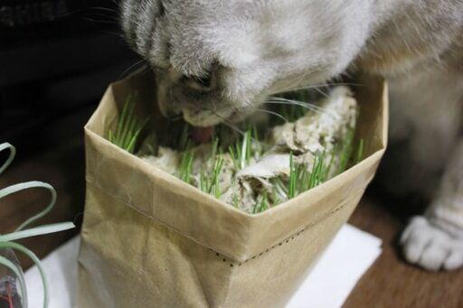 6/25までの無印良品週間ならさらにお得!「猫草栽培セット」が優秀な理由