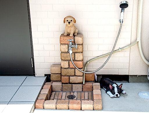 犬や猫を飼いたい人必見!「ペット共生コミュニティアパート」ってなに?