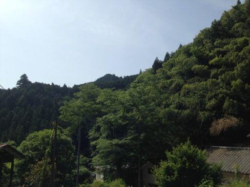 東京のはずれの山奥に建てた小屋