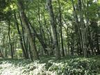 写真家・小林キユウの森をめぐる冒険【週末は森にいます】
