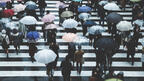 濡れた傘、放置しちゃダメ!100均アイテムでできる防カビ・雑菌対策