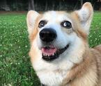 犬の熱中症にご用心!愛犬を猛暑から守る「ひんやり系」グッズ3つ