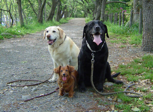 犬、猫、ウサギ、小鳥。「ペット種類別」飼い主がやるべき災害対策