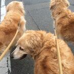 """東日本大震災で分かった""""多頭飼い""""ペットの避難で必要なこととは?"""