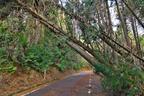 写真家・小林キユウの森をめぐる冒険【あぁ、まさかの倒木!】