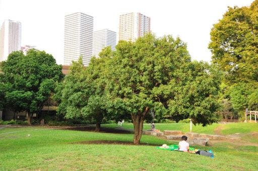 マンションと公園