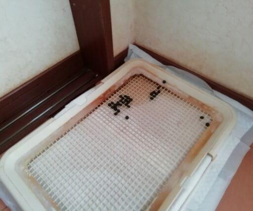 うさぎのトイレ