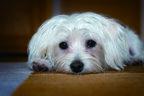 愛犬の性格によって違う!来客時に飼い主はどう対応すればいい?