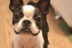 犬のケア、しつけ、フード管理…。愛犬の困ったを対処する方法3つ