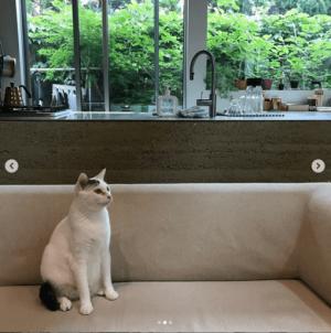 ディンプル建築設計事務所・堀 泰彰さんの自宅