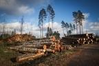 地球の樹木は毎年150億本失われている!森林破壊の厳しい現実