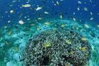 ダイバーから改めて注目を集める「フィリピン・ボホール島」