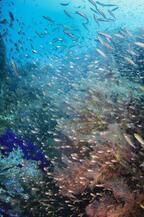季節限定のダイビングスポット!マレーシア、レダン島の濃密な海へ!