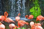 世界有数の鳥の楽園!シンガポール「ジュロン・バード・パーク」