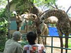 創立150周年を迎えたアジア最古の動物園「サイゴン動植物園」