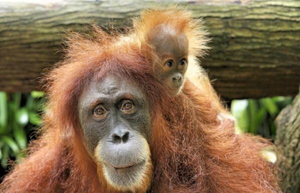 シンガポールの動物園で700以上の動物の赤ちゃんが誕生