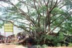 絶景を望む巨大なツリーハウスのカフェ「ザ・ジャイアント・チェンマイ」