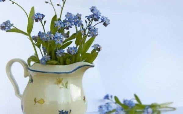 驚くほど癒された!憧れの花に囲まれた生活を始めてみた【体験談】