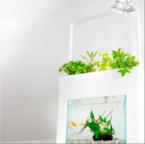 魚が育てる!?「有機野菜・ハーブ」栽培キット