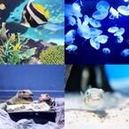 サンシャイン、閉館後の水族館でリラックス「水族館Nightヨガ」を開催
