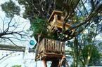 【期間限定】緑に囲まれたツリーハウスカフェ!「椿森コムナ」で夏イベント開催