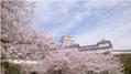 トリップアドバイザーの口コミで選ぶ「日本のサクラ100選」