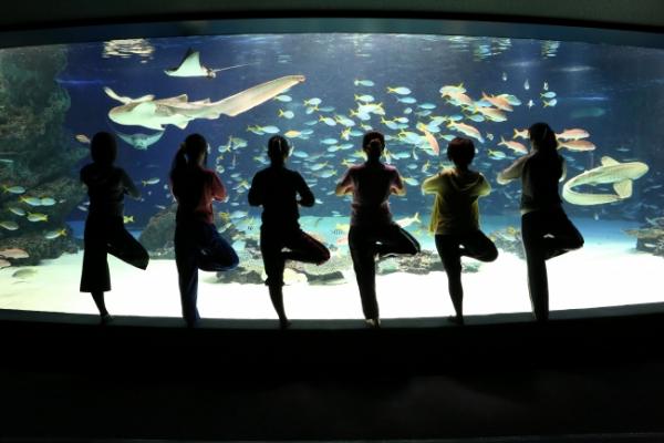 夜のサンシャインシティで「海の中の水族館ヨガ」を体験