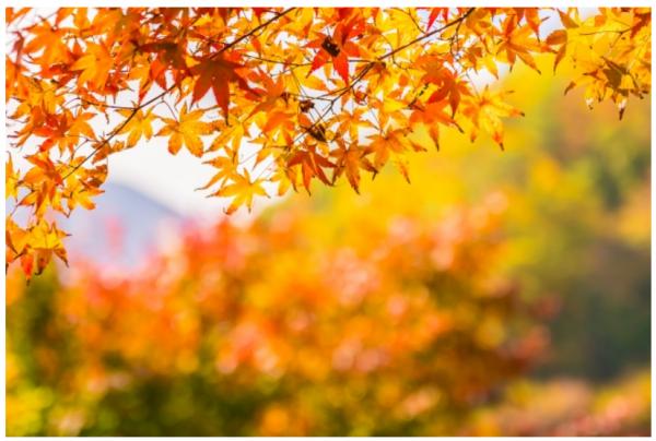 【熱海】愛犬とおトクに楽しむ「秋のアウトドア」