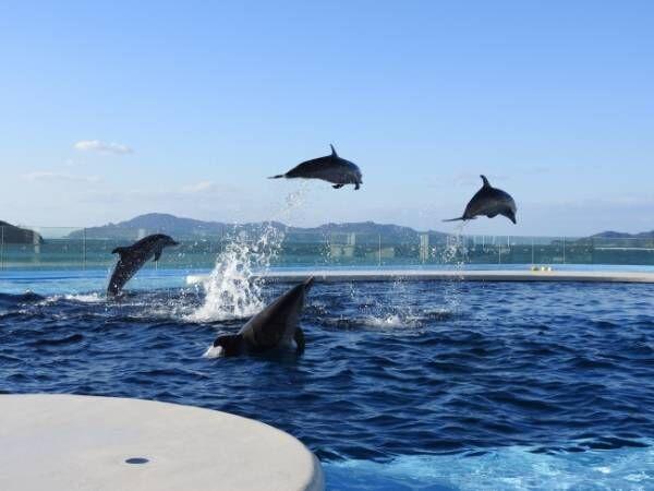 世界も注目する香川に四国最大級「四国水族館」オープン