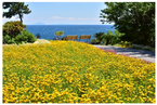 伊豆の4施設が春のキャンペーンを実施
