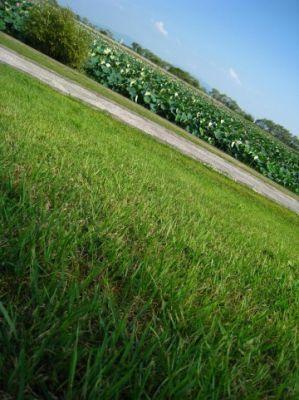 損保ジャパン CO2削減と芝生化を推進