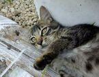 保険会社の社長が愛猫ブログ開始「とらっきぃーな日々」