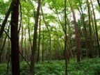 環境を通し、社会に役立つ存在に 損保ジャパン環境財団