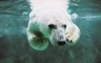 国内・北海道旅行におすすめ!「旭山動物園」の見どころは?