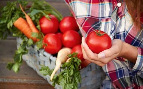 子どもと一緒に家庭菜園を楽しもう! 初心者向けにぴったりな野菜は?
