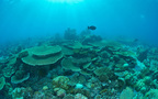 海水浴は危険がいっぱい! 危険な場所、生物と対策法