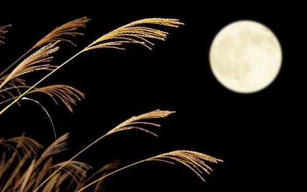 秋を楽しもう! 自家製きな粉で作る、お月見団子