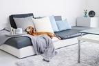 ペットと快適に暮らす。インテリアになじむスタイリッシュなおすすめペット用ベッド