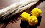 子どもと一緒に行事食 菊花のゼリーで「重陽の節句」を祝う