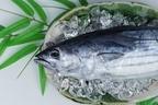 カツオは栄養豊富!旬やおすすめの食べ方は?新鮮な魚で健康生活!