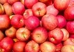 りんごの栄養は加熱しても消えない?正しい食べ方で効果を実感しよう!
