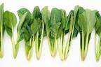 小松菜は栄養豊富な野菜!ほうれん草との違いやおすすめの調理法を紹介