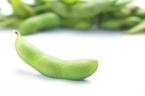 【枝豆と大豆の違い】それぞれの魅力や味わい方に迫る!黒豆も大豆?