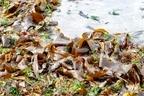 海藻とはどんなもの?種類や海草との違いから多彩な利用方法まで紹介