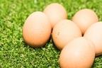 【卵の栄養】食べ方で違いがある!効率よく吸収するポイントを徹底解説